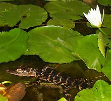 Water lily and buddy by ♥⊱ B. Randi Bailey
