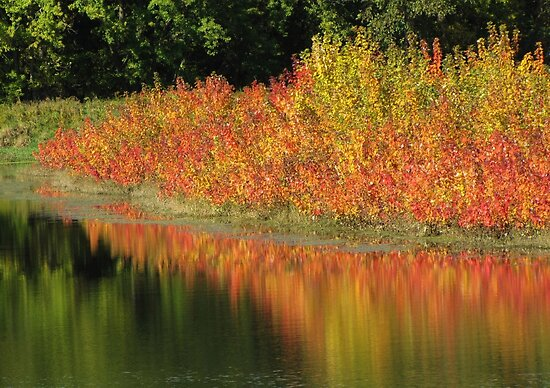 Sumac Reflections by lorilee