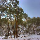 Snowgums 2 by DavidsArt