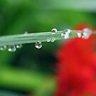 Droplets by Astrid Ewing Photography