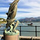 Barmouth Harbour Dolphins  by Anthony  Poynton