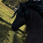 Black Stallion by anguishdesigns