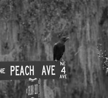 Peach Ave by Shane Jones