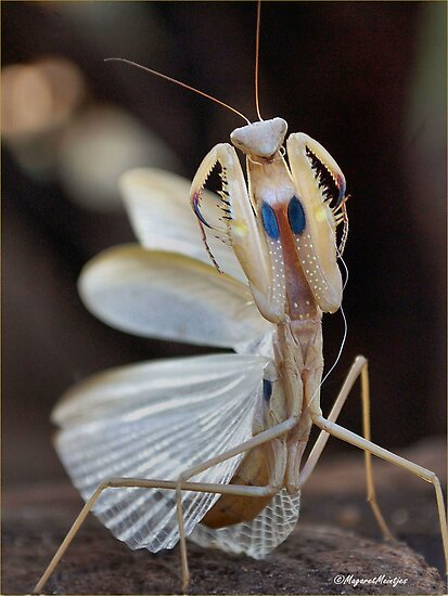 """ELEGANCE"" IN CAPTURE - The praying mantis by Magaret Meintjes"