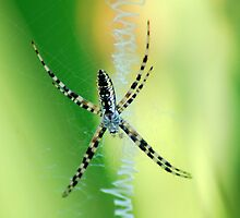 Patience of a Spider by lcrandall