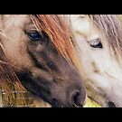 Acharacle Horses by Kirsty Auld