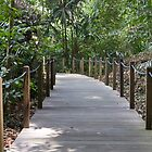 Path through Rainforest inside the Singapore Botanic Garden by ashishagarwal74