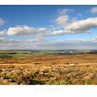 Stainton Moor by Andrew Roland
