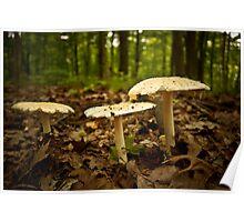 Love Fungi Poster