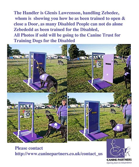 Dog for Disabled People  by Elaine123