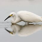 Reflection of an Egret by ruth  jolly