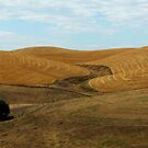 Northern California Pastoral - Dunnigan Hills, Yolo County, CA by Rebel Kreklow
