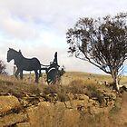 Horse & Gig, Heritage Hwy, Tasmania by Wendy Dyer