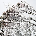 Icy Trees by geophotographic
