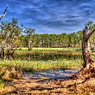 """Billabong at Kakadu"" by jonxiv"