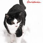 White Christmas - Polly the rescue cat by Jo-Lou