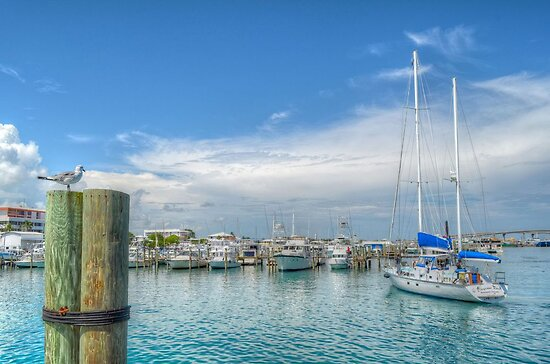 Seagull watching a boat coming back at the marina in Nassau, The Bahamas by 242Digital