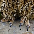 Talons by Nancy Richard