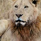 African Lion by Roger  Mackertich