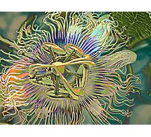 Aliens have landed Photographic Print