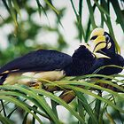 Hornbills by Dean Mullin