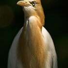 Egret by Dean Mullin