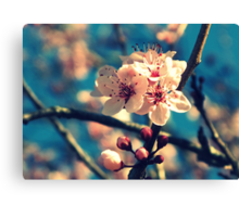 Blue Sky and Spring Blossoms Canvas Print