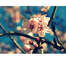 Blue Sky and Spring Blossoms Photographic Print