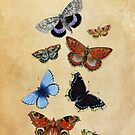 Butterflies by Claire Elford