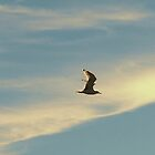 Seagull by Barry W  King