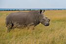 THE RAREST.  One of only four Northern White Rhinos remaining in Africa by Neville Jones