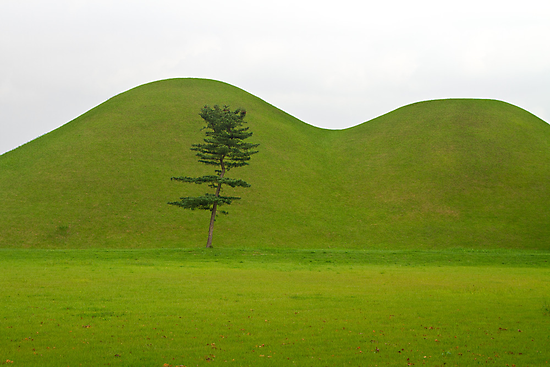 Hill tombs and tree, Korea by Gabor Pozsgai