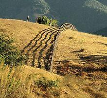 Monterey Hills 2 by Ellen Cotton