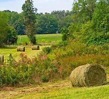 Baling Hay-3 by Nicole  McKinney