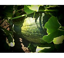 Now this is a squash! Photographic Print