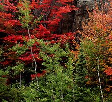 Sudbury Ontario Fall Colors by Laura Lea Comeau