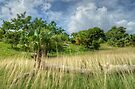 Country Side in Nassau, The Bahamas by 242Digital