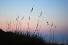 Sea Oats Sunrise 1 by Dawne Dunton