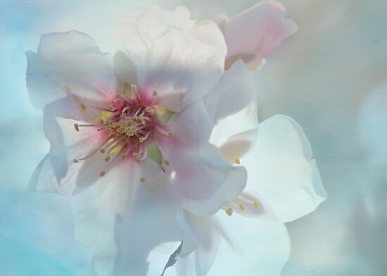 spring by Teresa Pople