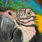 Macaw by Citisurfer