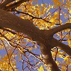 Yellow Locust Tree by Karen Jayne Yousse