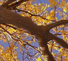 Yellow Locust Tree by Karen Jayne Yousse