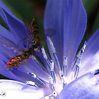 A Quiet Moment on the Chicory by JMcCombie