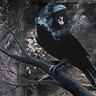 Raven Black by codyvandezande