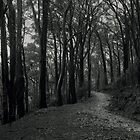 Dandenongs track by athex