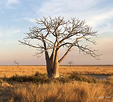 Boab Tree out on the marsh. Derby, West Kimberley region of Western Australia. by Mary Jane Foster