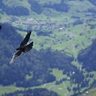 Birds Säntis Switzerland by Frederic Chastagnol
