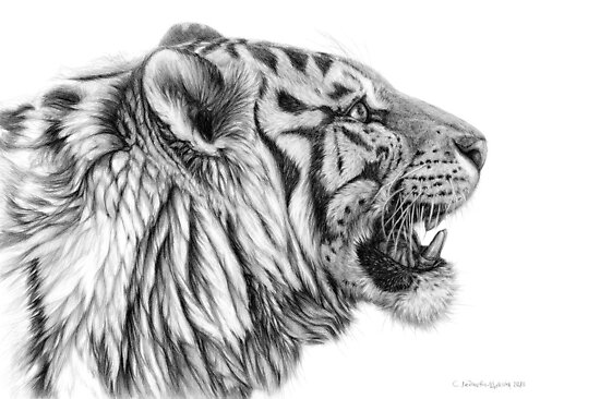 White Tiger profile g01 by schukina by schukinart