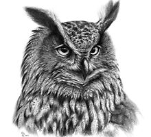 Eurasian Eagle Owl  g2012-045 by schukina by schukinart