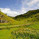 Cressbrook Dale near to Wardlow  by Rod Johnson
